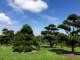 Die Klientel der Baumschulbetreiber aus dem Weser-Ems-Gebiet ist international. Sage und schreibe 40 Prozent des Geschäftes werden über den Export ins Ausland abgewickelt. Tendenz: weiterhin steigend. In aller Welt weiß man offenbar die gute Qualität der Pflanzen und Bäume aus dem Ammerland zu schätzen.