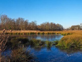 """""""Dank der guten Zusammenarbeit mit den Fachleuten des LBEG und den einzelnen Landwirten vor Ort sind wir dabei zu zeigen, dass durch eine individuell angepasste Wasserregulierung auf den Versuchsflächen deutliche Fortschritte in Richtung einer torf- und klimaschonenden Landwirtschaft in Moorgebieten möglich sind"""", erläuterte Kammerpräsident Gerhard Schwetje der Ministerin."""