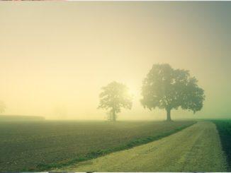 """Barbara Otte-Kinast: """"Niedersachsen wird die Spielräume auch für mehr Umwelt- und Klimaschutz nutzen und damit zur Stärkung der biologischen Vielfalt in der Agrarlandschaft beitragen."""" Zu diesem Zweck sollen die Agrarumwelt- und die Vertragsnaturschutzmaßnahmen weiterentwickelt werden."""