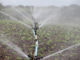 Die Entscheidung über die Wassermengen, die ein Landwirt zur Beregnung aus dem Grund- oder Oberflächenwasser entnehmen darf, liegt bei der jeweils zuständigen unteren Wasserbehörde