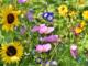 Die Niedersächsische Bingo-Umweltstiftung fördert Umwelt- und Naturschutzprojekte sowie Projekte zugunsten der Entwicklungszusammenarbeit und der Denkmalpflege. Die Stiftung finanziert sich aus der Glücksspielabgabe und vor allem aus Einnahmen der Bingo-Umweltlotterie. Weitere Informationen unter www.bingo-umweltstiftung.de.