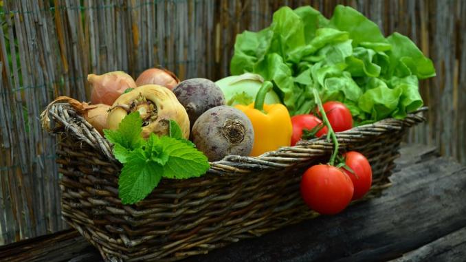 Immer mehr Gemüse wird unter hohen begehbaren Schutzabdeckungen angebaut. Insgesamt wurde diese Anbaufläche zum Vorjahr um 8,0% auf rund 92 ha ausgeweitet. Die Erntemenge unter Schutzabdeckungen stieg um fast 30,0% gegenüber 2017 auf ca. 29.600 Tonnen.