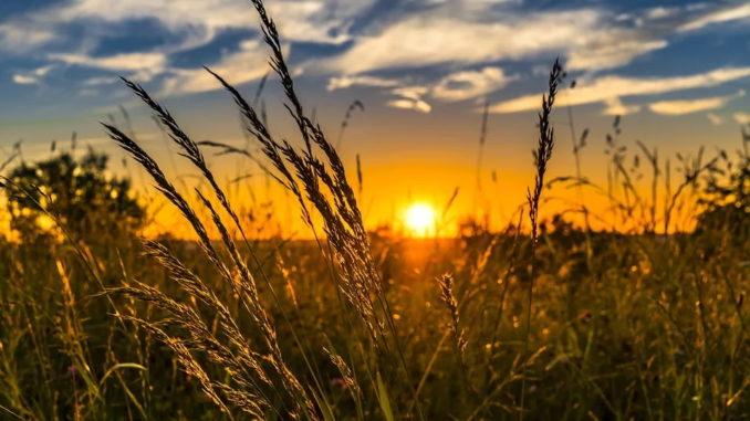 Landwirtschaftszählung 2020 beginnt in Niedersachsen im Februar