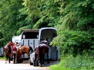 Pferdeanhänger kaufen - worauf sollte man achten? Ratgeber