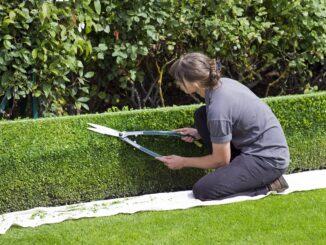 Beruf Gärtner und Landschaftsgärtner – worin unterscheiden sie sich?