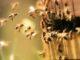 Niedersächsischer Weg und Insektenschutzpaket können vereinbar sein
