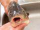 Höchste Hygienestandards beim Lebensmittel Fisch - anspruchsvolle Anforderung an die amtliche Kontrolle
