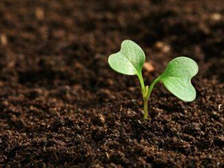Pilotprojekt überprüft Bodenverbesserung landwirtschaftlicher Flächen durch Auftrag von Baggergut aus der Ems