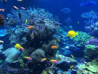 Neu: Internationaler Bachelorstudiengang Marine Geosciences