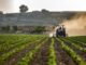 Endgültige Ergebnisse der Landwirtschaftszählung 2020: Landwirtschaft als Lebengrundlage in Niedersachsen